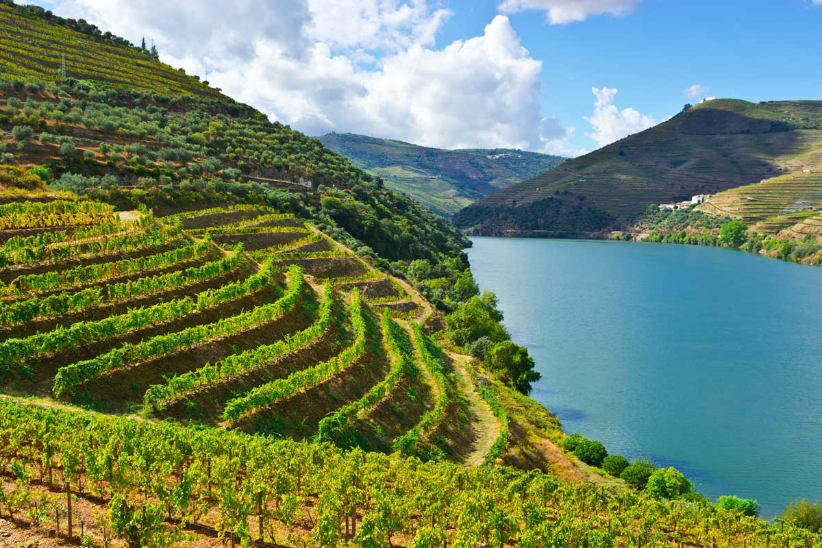 Portugal Valley with Vineyards